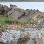 coastal_meadow_mix